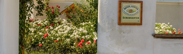 Duftspaziergang im Rosengarten